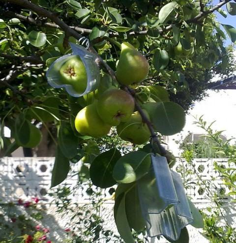 Овощи и фрукты в форме сердца.